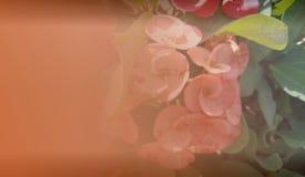 Abstrakcjonistyczny tło szablon dla strony internetowej, sztandar, wizytówka, zaproszenie Abstrakcjonistyczny ewidencyjny grafika fotografia royalty free