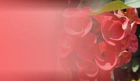 Abstrakcjonistyczny tło szablon dla strony internetowej, sztandar, wizytówka, zaproszenie Abstrakcjonistyczny ewidencyjny grafika zdjęcie royalty free