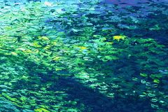 Abstrakcjonistyczny tło w błękitnym, kolorze żółtym i zieleni, tonuje, zdjęcia stock