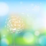 Abstrakcjonistyczny tło z kwiatu dandelion Zdjęcia Stock