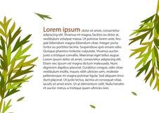 Abstrakcjonistyczny tło zieleni liść Fotografia Stock