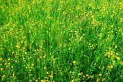 Abstrakcjonistyczny tło zielona łąka z małymi żółtymi okwitnięciami Obraz Royalty Free