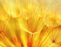 abstrakcjonistyczny tła dandelion kwiat Obraz Stock