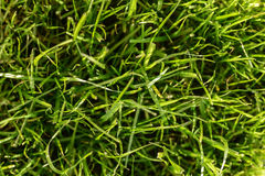 abstrakcjonistyczny tła miasta trawy zieleni gazonu parka tekstury widok Zdjęcia Stock