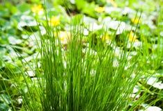 abstrakcjonistyczny tła miasta trawy zieleni gazonu parka tekstury widok Zdjęcie Stock