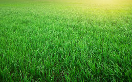 abstrakcjonistyczny tła miasta trawy zieleni gazonu parka tekstury widok Obraz Stock