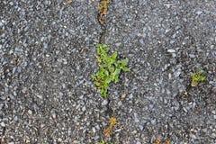 abstrakcjonistyczny tła miasta trawy zieleni gazonu parka tekstury widok Fotografia Royalty Free