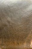 Abstrakcjonistyczny tło jaskrawa szorstka skóra Obraz Royalty Free