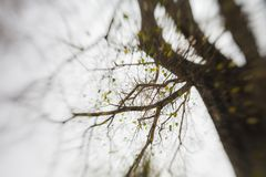 Abstrakcjonistyczny tło Abstrakcjonistyczny las, fotografia drzewa w tropikalnych lasach,/ Zdjęcia Royalty Free