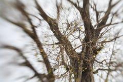 Abstrakcjonistyczny tło Abstrakcjonistyczny las, fotografia drzewa w tropikalnych lasach,/ Fotografia Stock