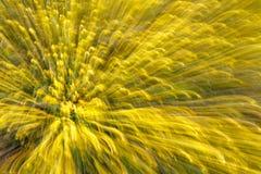 Abstrakcjonistyczny tło natura zdjęcie stock