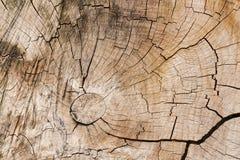 Abstrakcjonistyczny tło, tekstura stary gnarl drewno Obrazy Royalty Free