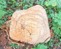 abstrakcjonistyczny tła wzoru fiszorka drzewo Zdjęcie Royalty Free