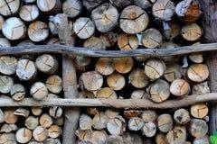 abstrakcjonistyczny tła wzoru fiszorka drzewo Zdjęcie Stock