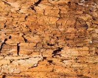 abstrakcjonistyczny tła wzoru fiszorka drzewo Fotografia Royalty Free