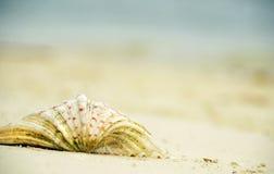 Abstrakcjonistyczny tło zamazuje pojęcie marzy tropikalny wyspa wakacje Zdjęcia Stock