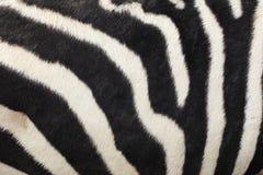 Abstrakcjonistyczny tło zebra lampas Zdjęcie Stock