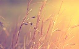 Abstrakcjonistyczny trawy tło Obraz Royalty Free