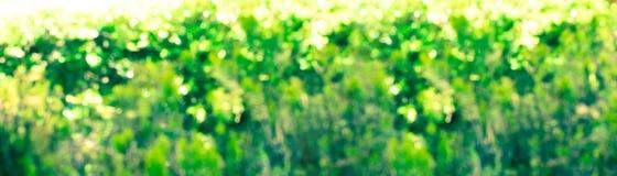 Abstrakcjonistyczny Wielkanocny kolorowy natury bokeh tło tęsk sztandar Zdjęcia Royalty Free