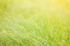 Abstrakcjonistyczny wilgotnościowy trawy tło Zdjęcie Stock