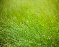 Abstrakcjonistyczny wilgotnościowy trawy tło Obraz Stock