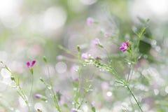 Abstrakcjonistyczny wiosna kwiat zamazywał tło łyszczec malutki pur Fotografia Stock