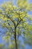 abstrakcjonistyczny wiosny drzewo obrazy stock