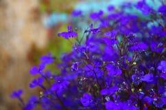 Abstrakcjonistyczny wizerunek menchie i purpurowi kwiaty kwitniemy, z błyskotliwości narzutą fotografia stock