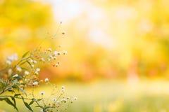 Abstrakcjonistyczny zakończenie stokrotka kwiaty Lato kwitnie na naturalnym bokeh tle fotografia royalty free