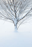 Abstrakcjonistyczny zbliżenie drzewo w zimie Zdjęcie Royalty Free