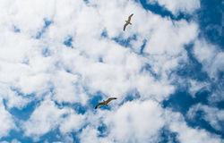 abstrakcjonistycznych błękitny chmur ilustracyjny nieba wektor Obrazy Royalty Free