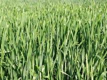 abstrakcjonistycznych upraw rolna natura Fotografia Stock