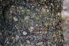 abstrakcyjny tło Barkentyna drzewna tekstura Fotografia Stock