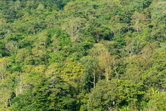Abstraktów drzew zielony tło Zdjęcia Stock
