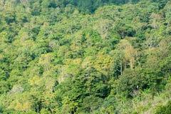 Abstraktów drzew zielony tło Zdjęcia Royalty Free