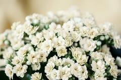 Abstraktów kwiatów Lekki delikatny bukiet, selekcyjna ostrość Piękny naturalny kwiecisty tło, zawsze modny nowożytny Obrazy Stock