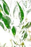 abstraktów liście Zdjęcia Stock