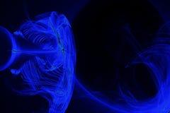 Abstraktów wzory Na Ciemnym tle Z niebieskich linii krzyw cząsteczkami ilustracja wektor