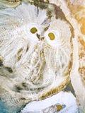 Abstraktów wzory na ziemi od wody leją się przypominający sowy Zdjęcia Stock