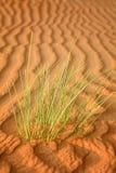 Abstraktów wzory w diunach Arabska pustynia Zdjęcia Stock