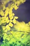 Abstraktów zamazani naturalni tła z zielonym ulistnieniem Obraz Stock
