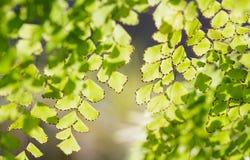 Abstraktów zamazani naturalni tła z zielonym ulistnieniem Obrazy Royalty Free