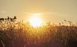 Abstrakt ängbakgrund med gräs Arkivfoto