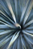 abstrakt agave Royaltyfria Foton