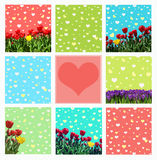 Abstrakt background with tulips and crocuses for greeting with a Royalty Free Stock Images