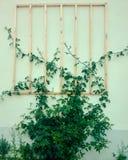 Abstrakt bakgrund/abstrakt begrepp av naturliga sidor med av ljus Arkivfoto