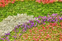 Abstrakt bakgrund av blommor (petunian) Royaltyfri Bild