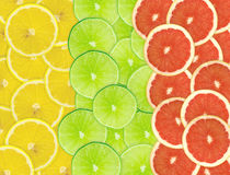 Abstrakt bakgrund av citrusa skivor Arkivfoton