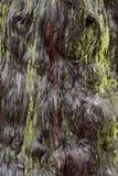 Abstrakt bakgrund av den blötta skällmodellen med grön mossa Royaltyfri Foto