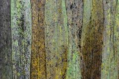 Abstrakt bakgrund av den bruna torra vassen lämnar med svarta, gula gröna prickar och områden royaltyfri foto